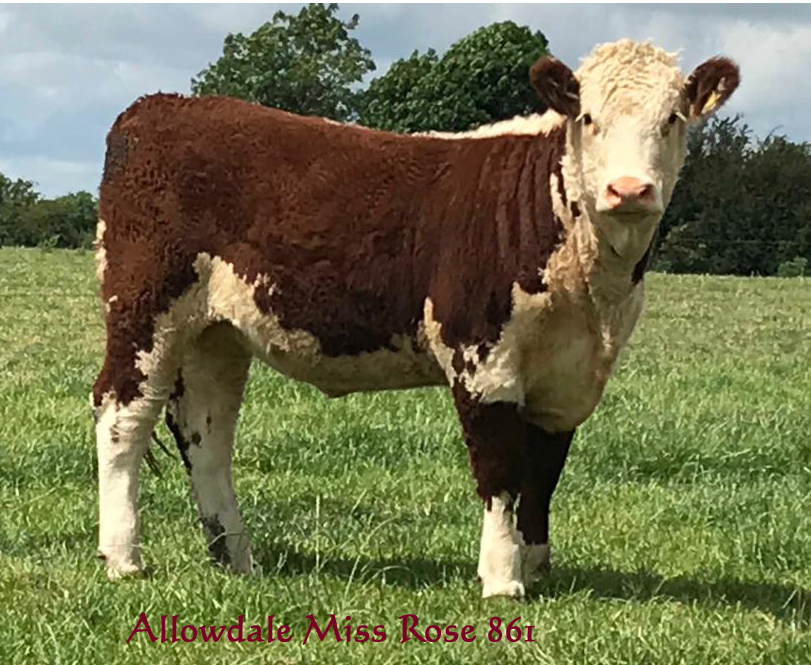 Allowdale Miss Rose 861