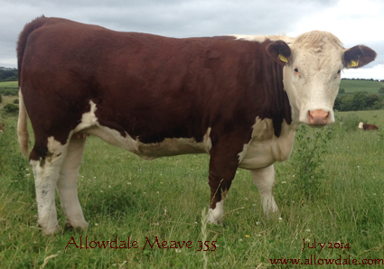 Allowdale Meave 355