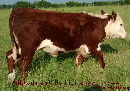 Allowdale 1 Wily Elaine 387