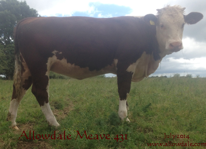 Allowdale Meave 431