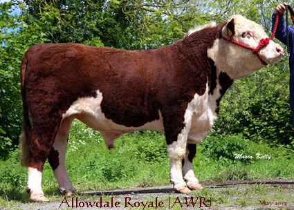 Allowdale Royale