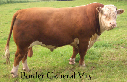 Border General V25 - Allowdale Herefords Reference Sire