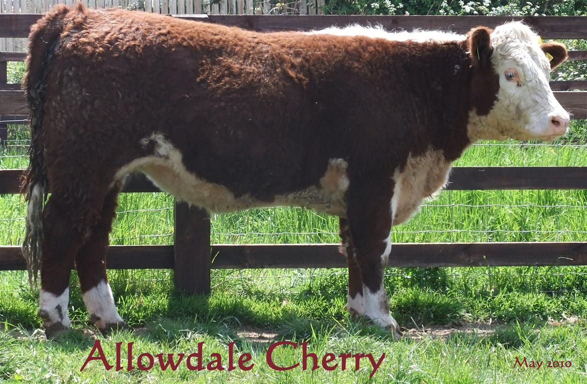 Allowdale Cherry