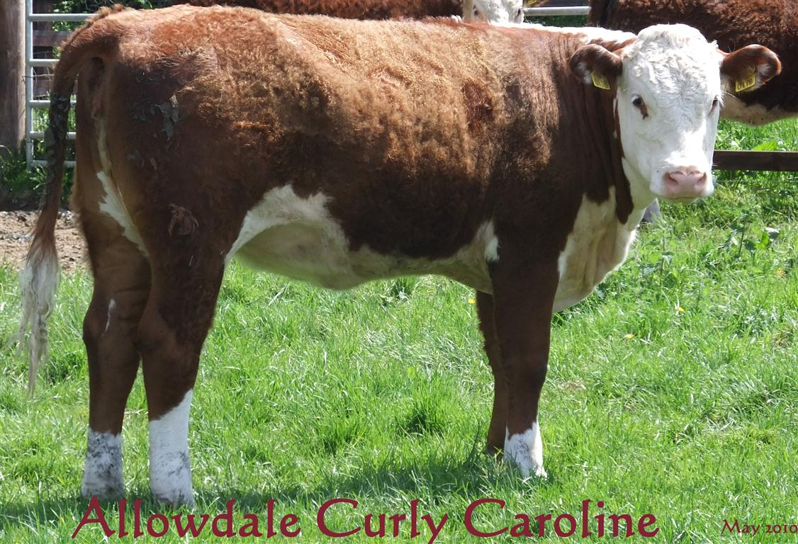 Allowdale Curly Caroline