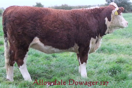 Allowdale Dowager 127