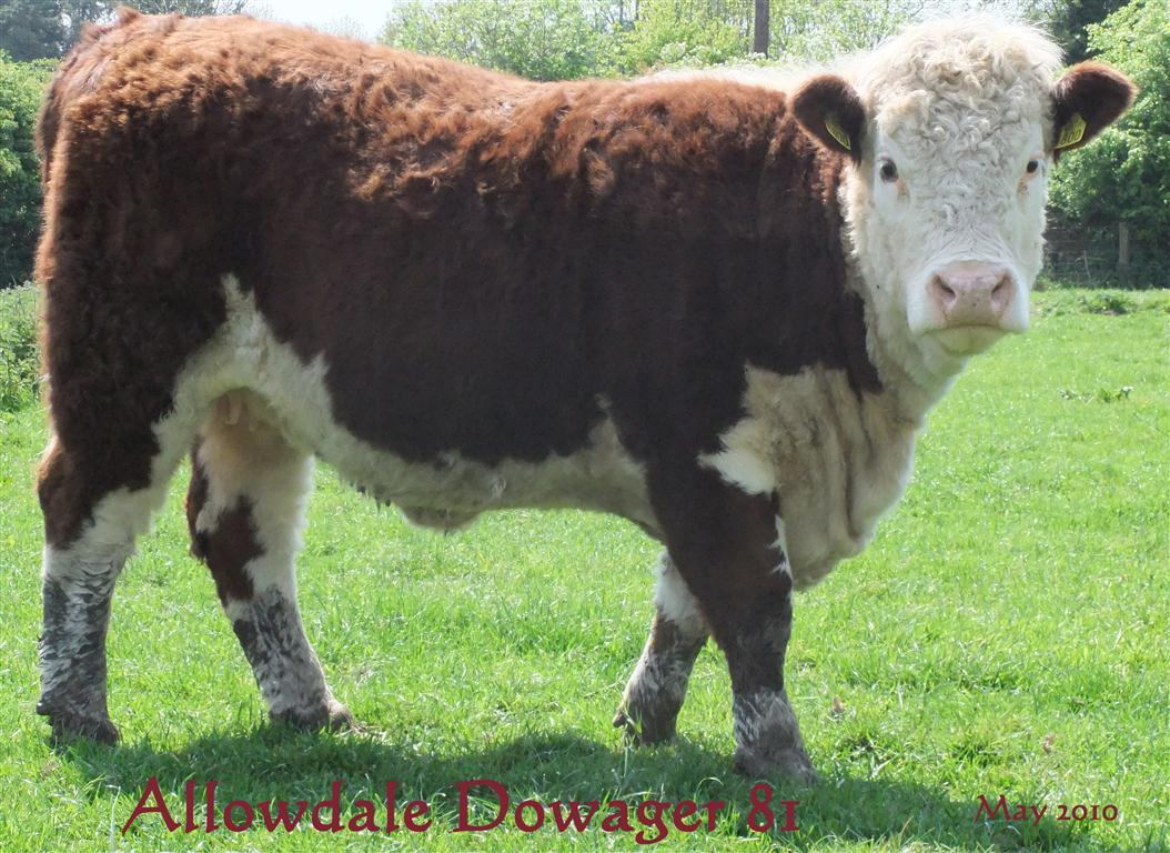 Allowdale Dowager 81