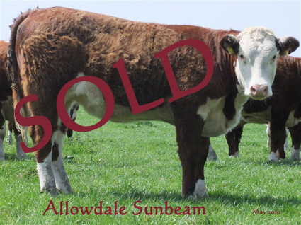 Allowdale Sunbeam