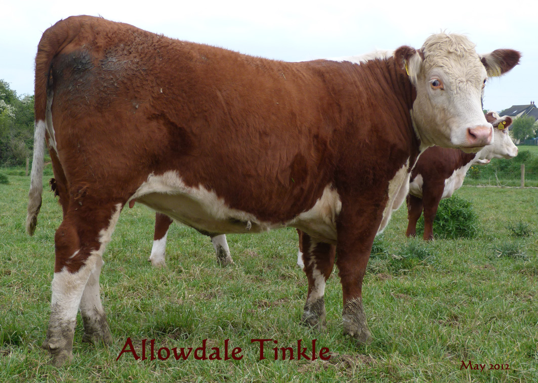 Allowdale Tinkle 187