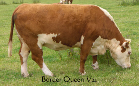 Border Queen V21