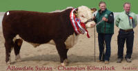 Allowdale Sultan - Supreme Hereford Champion
